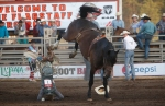 A rider lands on his head after being tossed from his horse during the bareback bronc riding competition at the Flagstaff Pro Rodeo. The rider stood up and walked away immediately after.