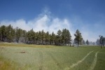 Smoke from a managed fire operation being conducted by the Coconino National Forest rises over a field near Mormon Lake.