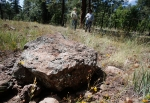 A large chunk of basalt sits in a forested area near Parks, Ariz. on the site of a proposed gravel mine. The sale of the land for mining is opposed by many area residents.