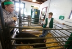 Rebekah Lilly, 12, and Tyler Morgan, 13, wait for their turn to show their 4-H Club pigs at the Coconino County Fair Friday morning. The annual fair continues at the Fort Tuthill County Fair Grounds through Monday.