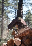 A close up of a dangle head processor cutting logs to length at a logging site outside of Williams, Ariz.