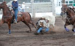 Terry Zenkawich of Snowflake, Ariz. grabs onto a steer's horns as he attempts to bring it to the ground during the steer wrestling competition at the Flagstaff Pro Rodeo Thursday.